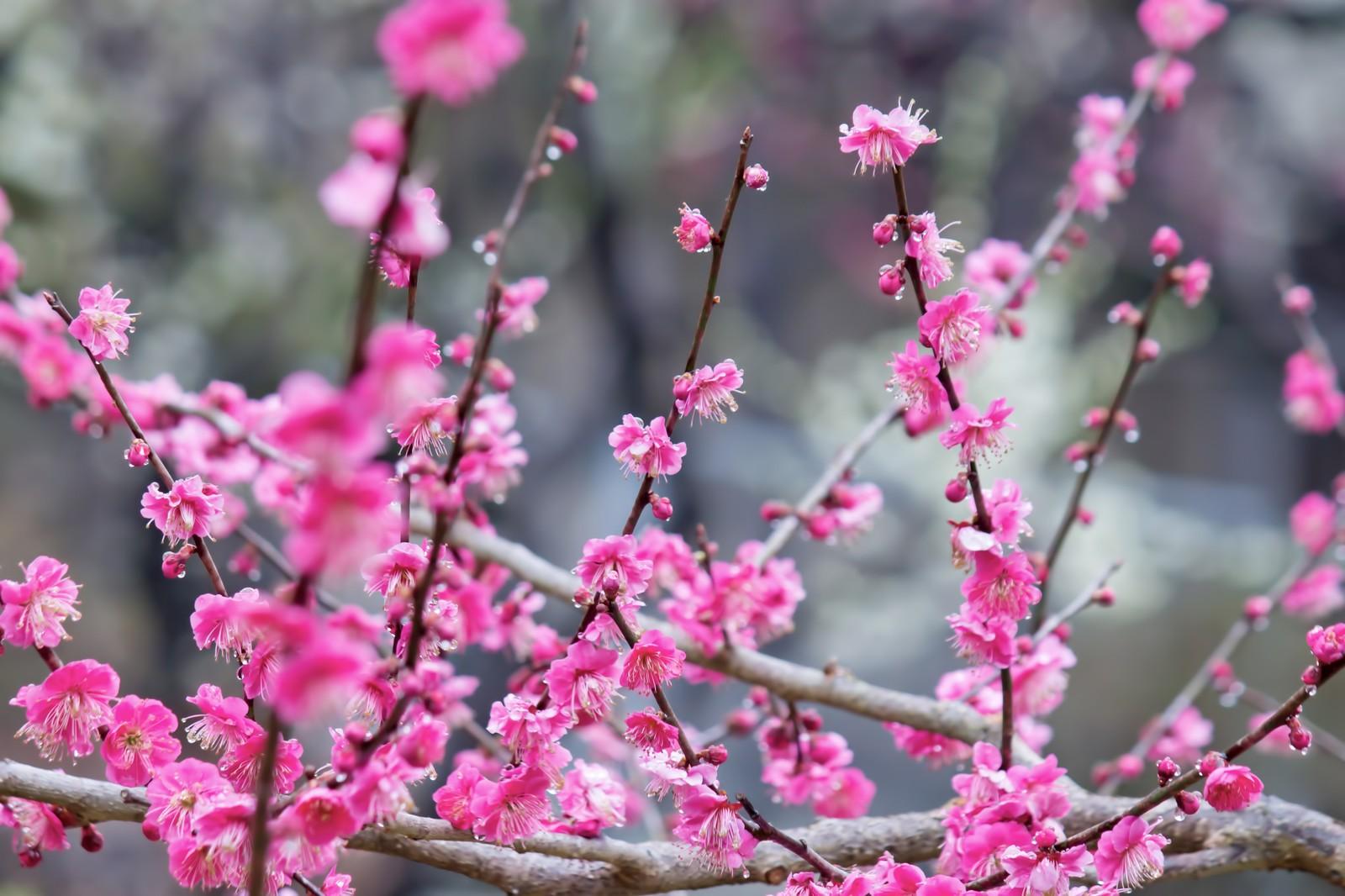 花 キャスト の 孤高